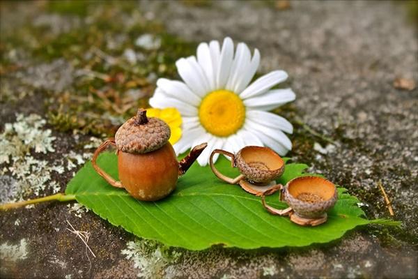 acorn craft 13 17 Interesting acorn craft ideas that will really amaze you
