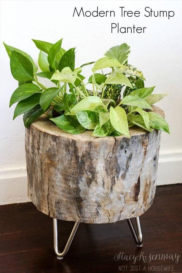 tree stump 9 Transform Tree Stump Into Home Decoration Items