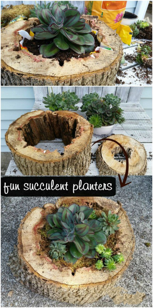 Succulent Garden