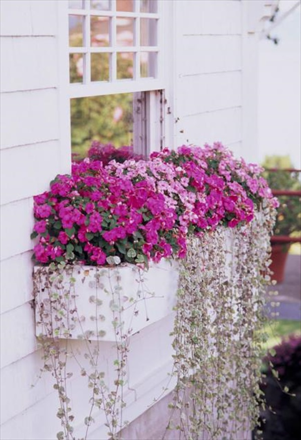 Graceful and beautiful window box with pink flowers